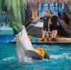 Дельфинарии, океанариумы в Востряково