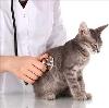 Ветеринарные клиники в Востряково